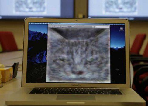 Искусственный интеллект Google тренируется на кошках