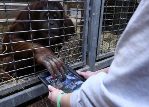 Обезьяний iPad [видео]