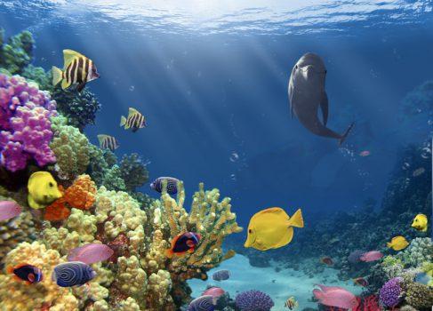 Создатели Ecco the Dolphin анонсировали на Kickstarter новое подводное приключение
