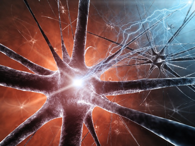 neural-connections