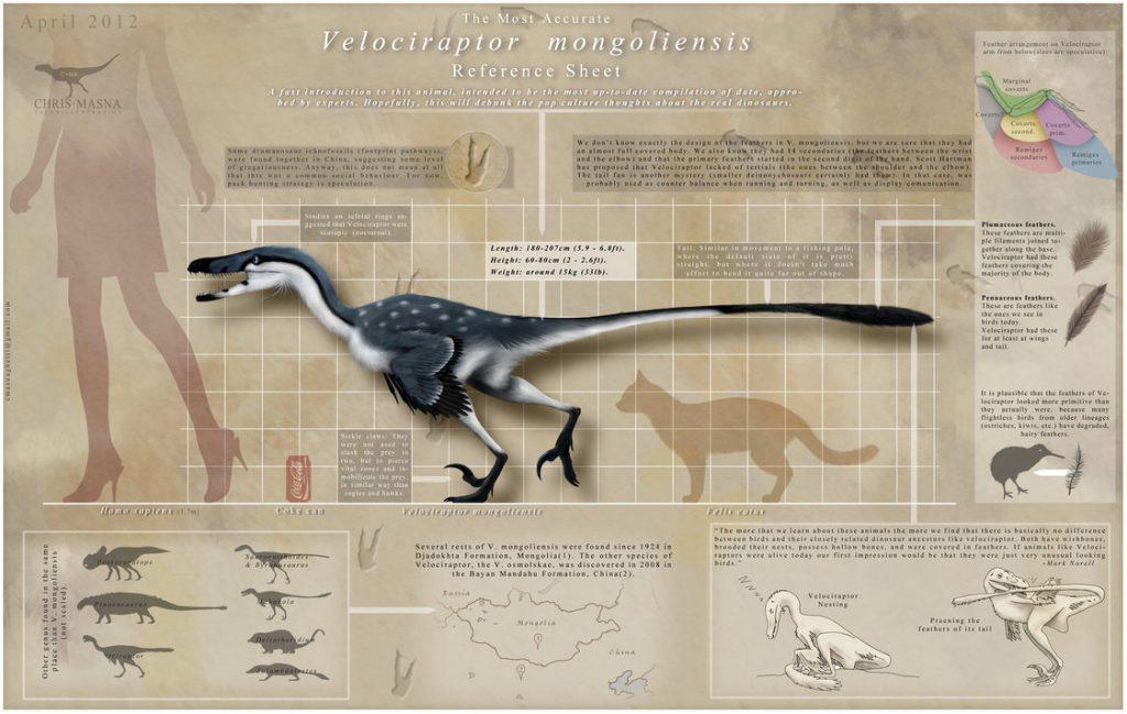 velociraptor_infographic