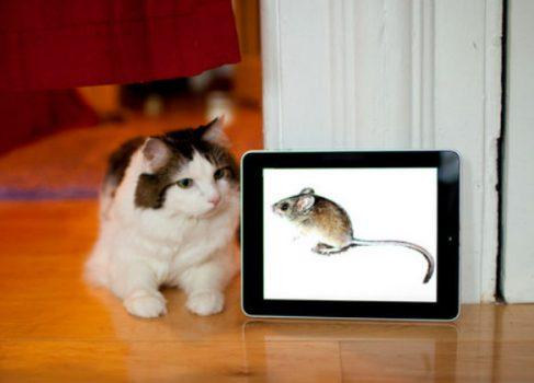 КотоАппы или Топ-3 iOS приложений для хвостатых