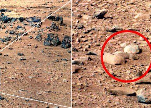 «Марсианская крыса» взорвала Интернет