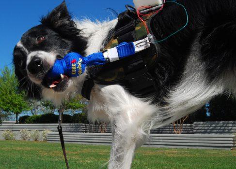 Google участвует в разработке собачьего мессенджера