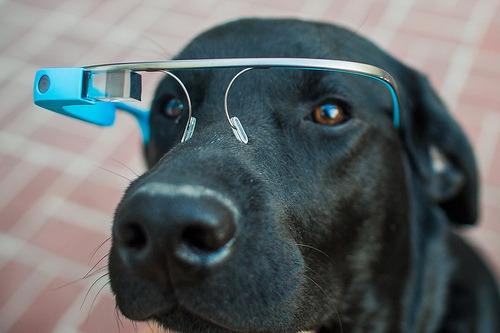 Google-Glass-Dog