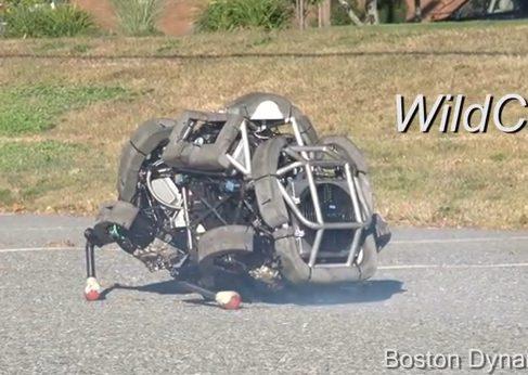 Робот Wild Cat может бегать галопом и преодолевать препятствия